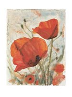 Tuscany Poppies I Fine Art Print
