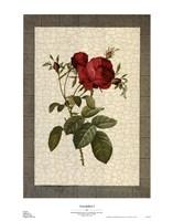 "Grandiflora I by Sarah Elizabeth Chilton - 20"" x 25"""