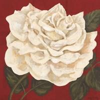 Rosa Blanca Grande I Fine Art Print