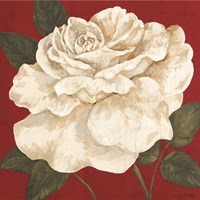 Rosa Blanca Grande II Fine Art Print