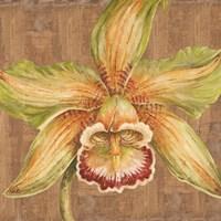 Aloha Beauty I Fine Art Print