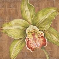 Aloha Beauty II Fine Art Print