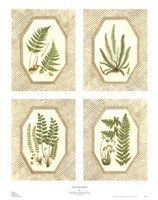 Four Fancy Ferns Fine Art Print
