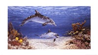 "Dolphin World by James Harris - 32"" x 18"""