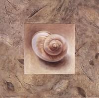 Shell IV Framed Print