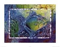 Twin Triggerfish Fine Art Print