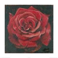 "Rosa Roja La Pasion Me Antoja by Patricia Pinto - 24"" x 24"""