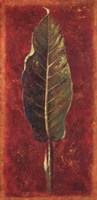 Caliente II Fine Art Print