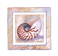 """Bordered Shell-Nautilus by Paul Brent - 11"""" x 11"""""""