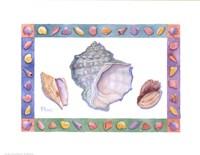 "Turbo Conch & Harp Shells by Paul Brent - 15"" x 12"""