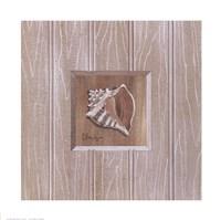 Beadboard Conch Framed Print