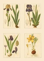 Miniature Botanicals III Fine Art Print