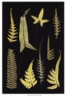 "Ferns on Black IV by Richard Henson - 13"" x 19"" - $13.49"