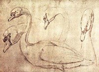 """Sepia Swan Study by Ourry - 19"""" x 13"""""""