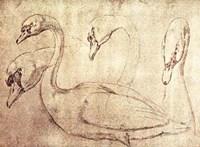 Sepia Swan Study Fine Art Print
