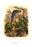 """Tropical Birds I by Cassell - 13"""" x 19"""""""