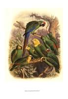 Tropical Birds I Fine Art Print