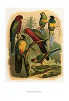 "Tropical Birds II by Cassell - 11"" x 14"""