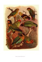 """Tropical Birds IV by Cassell - 11"""" x 14"""""""