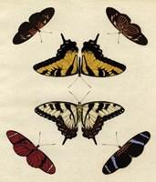 """Butterfly Melage II by Richard Henson - 11"""" x 13"""""""