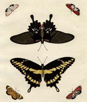 """Butterfly Melage III by Richard Henson - 11"""" x 13"""""""