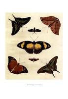 "Butterfly Melage IV by Richard Henson - 11"" x 13"""