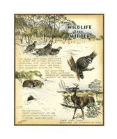 "Wildlife by Robert Settle - 10"" x 13"""
