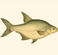 "10"" x 6"" Fish Posters"