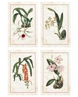 "Mini Orchids by Vision Studio - 9"" x 12"""