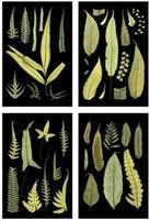 """Mini Ferns on Black by Chariklia Zarris - 9"""" x 12"""""""