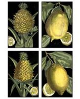 """Miniature Fruit by Chariklia Zarris - 9"""" x 12"""""""