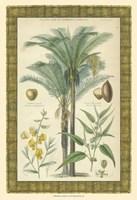 "Palms in Bamboo I by Chariklia Zarris - 13"" x 19"""