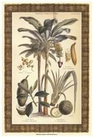 "Palms in Bamboo II by Chariklia Zarris - 13"" x 19"""