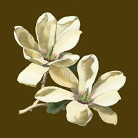 Magnolia on Taupe II by Chariklia Zarris - various sizes