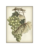 "Green Grapes I by Chariklia Zarris - 7"" x 9"""