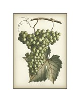 "Green Grapes II by Chariklia Zarris - 7"" x 9"""