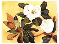 Southern Magnolia I Fine Art Print