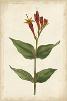 Vibrant Curtis Botanicals III Fine Art Print