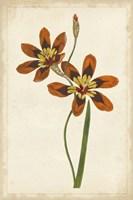 Vibrant Curtis Botanicals IV Fine Art Print