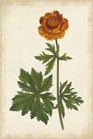 Vibrant Curtis Botanicals V Fine Art Print