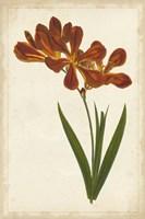 Vibrant Curtis Botanicals VI Fine Art Print