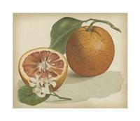 """Orange Study I by Chariklia Zarris - 11"""" x 9"""" - $10.49"""