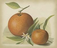 Orange Study II by Chariklia Zarris - various sizes - $12.99