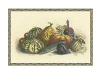 Melons and Gourds Fine Art Print