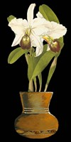 Orchids in Pot I by Chariklia Zarris - various sizes