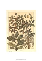 """Oak Tree by M. P. Verneuil - 13"""" x 19"""", FulcrumGallery.com brand"""
