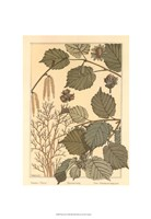 """Hazel Tree by M. P. Verneuil - 13"""" x 19"""" - $10.49"""