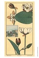 Water Lily I Fine Art Print