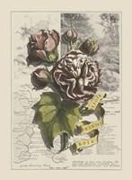 Garden in June I by Deborah Bookman - various sizes