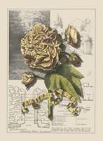 Garden in June II Fine Art Print